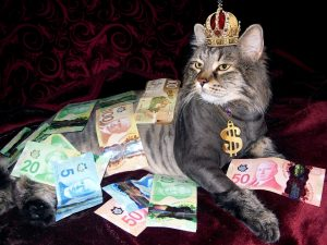 canadian money cat